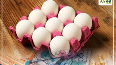 Photo of Минсельхоз Казахстана прокомментировал изменение правил субсидирования производителей яиц