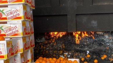 Photo of Более тонны опасных мандаринов уничтожили инспекторы МСХ