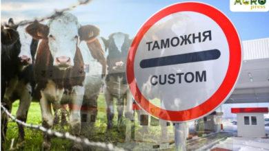 Photo of Полсотни нелегальных коров завез в Казахстан фермер из СКО