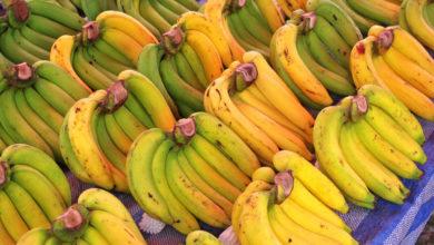 Photo of В Казахстан вновь не пустили почти 20 тонн бананов из РФ