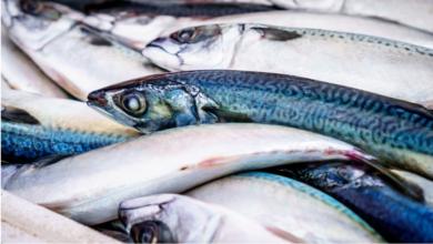 Photo of Массовые отравления рыбой угрожают Мактааральскому району