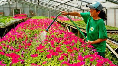 Photo of В Нур-Султане продолжаются масштабные работы по озеленению города
