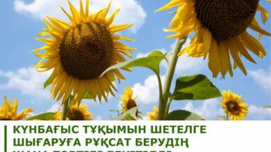 Photo of Новый порядок выдачи заключения на вывоз заграницу семян подсолнечника утвержден в МСХ