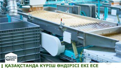 Photo of Производство риса в Казахстане выросло почти в 2 раза – Минсельхоз