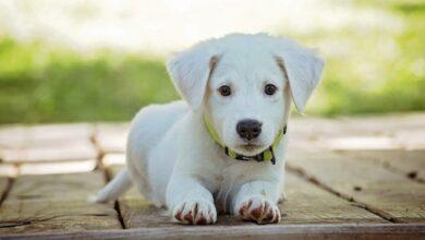 Photo of Министр экологии напомнил о Всемирном Дне защиты животных