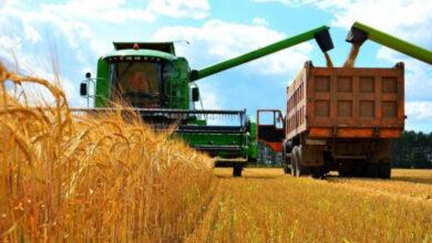 Photo of Казахстанское зерно пользуется повышенным спросом